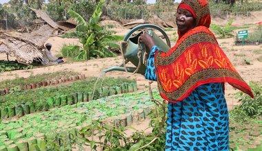 Au Tchad (province de Batha), Khalime Abderrasaoul arrose des semis à la pépinière de Zobo. Au premier semestre 2019, la pépinière a fourni quelque 250 000 plants d'arbres à 20 villages qui plantent des forêts. PAM / Maria Gallar.